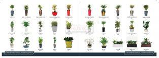 indoor Plants & landscaping Service