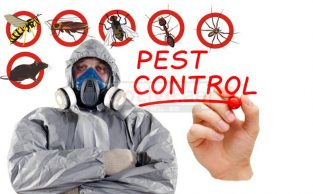 Pest control and Maintanence Work