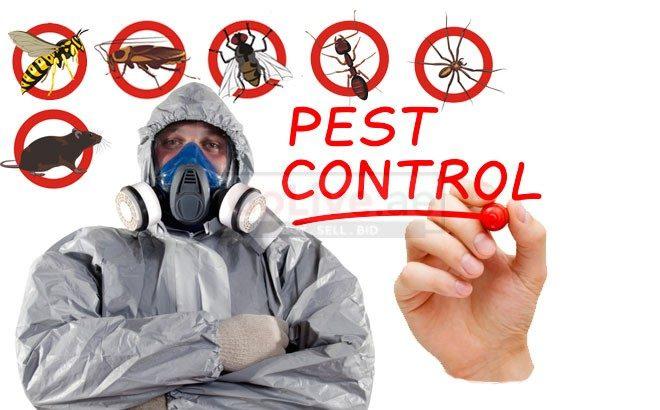 Pest control مكافحة حشرات