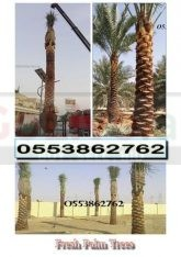 Date palm delivery and planting