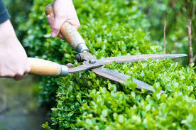 Landscape and pool cleaning services