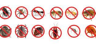 PEST CONTROL SERVICE WITH GUARANTEED RESULTS